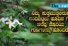 nandibattalu-flower-has-medicinal-properties